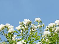 屋上緑化の効果について