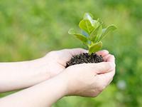 屋上緑化の助成金について