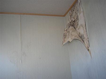 原因究明!賃貸アパート・マンションでの雨漏り対処法。