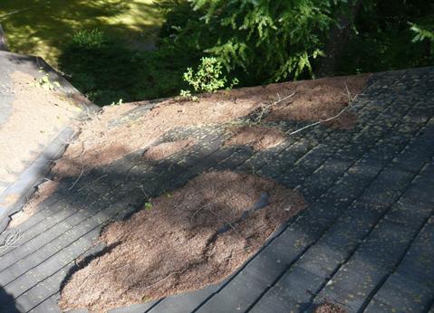 雨風に晒される屋根材は、激しく劣化する