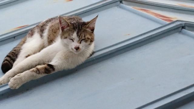 トタン屋根ってどんな屋根?種類やメリット・デメリットをわかりやすく解説
